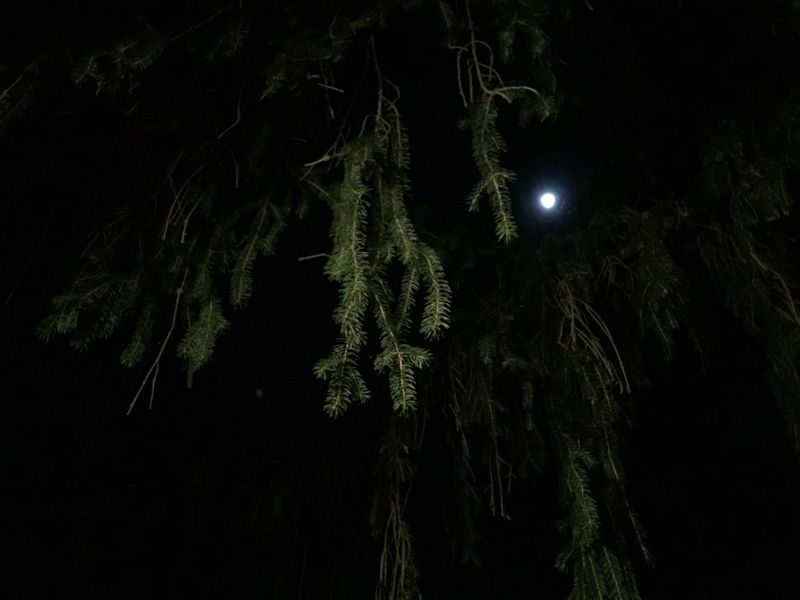 Treemoon