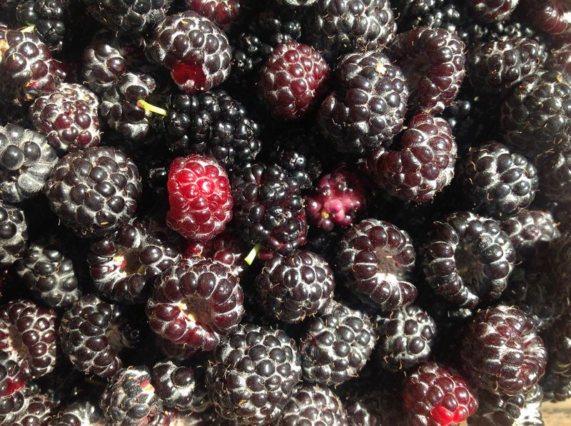 Berrymix